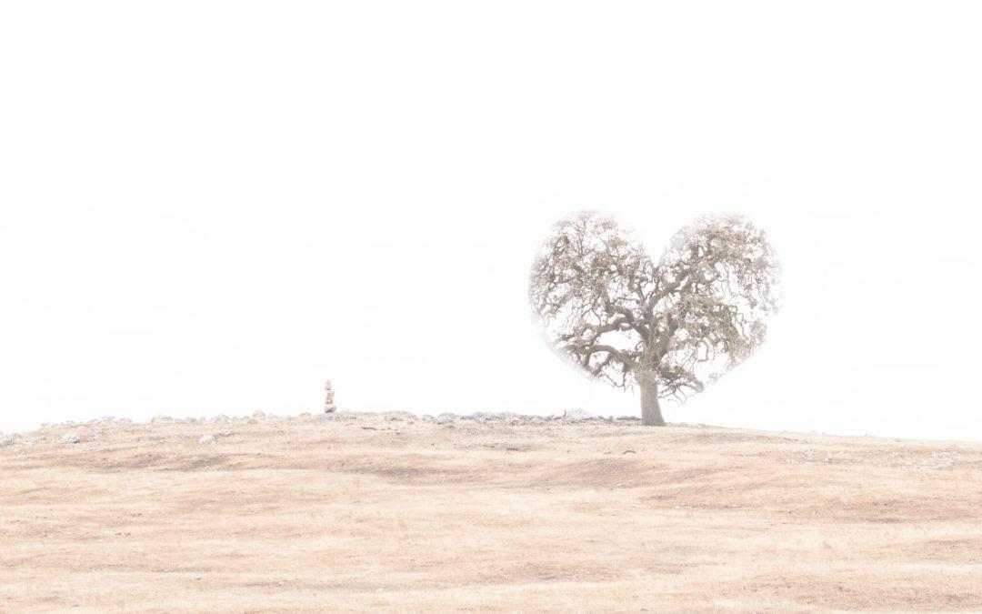 I heart oak trees
