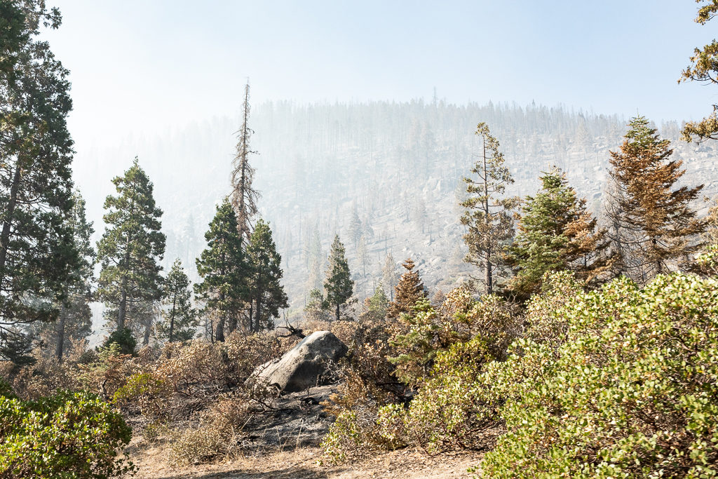 Elizabeth Hahn, Double Dome Rock, Stanislaus National Forest, California, Tuolumne County, Donnell Fire, WildFire, Forest, Sierra Nevada