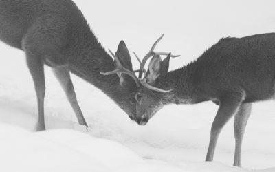 Deer Rumble