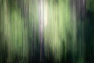 ICM Forest 5