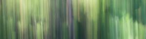 ICM Forest 4