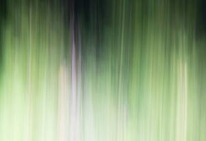 ICM Forest 6