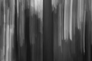 ICM Forest 2