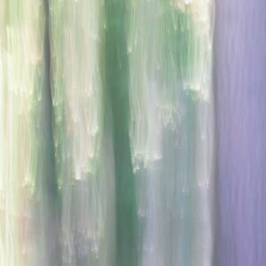ICM Forest 8