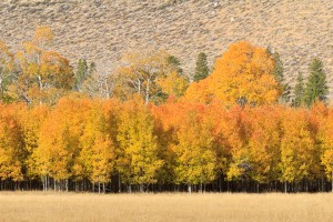 Eastern Sierra Nevada, Fall, Autumn