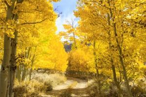 Eastern Sierra Nevada, Fall, Autumn